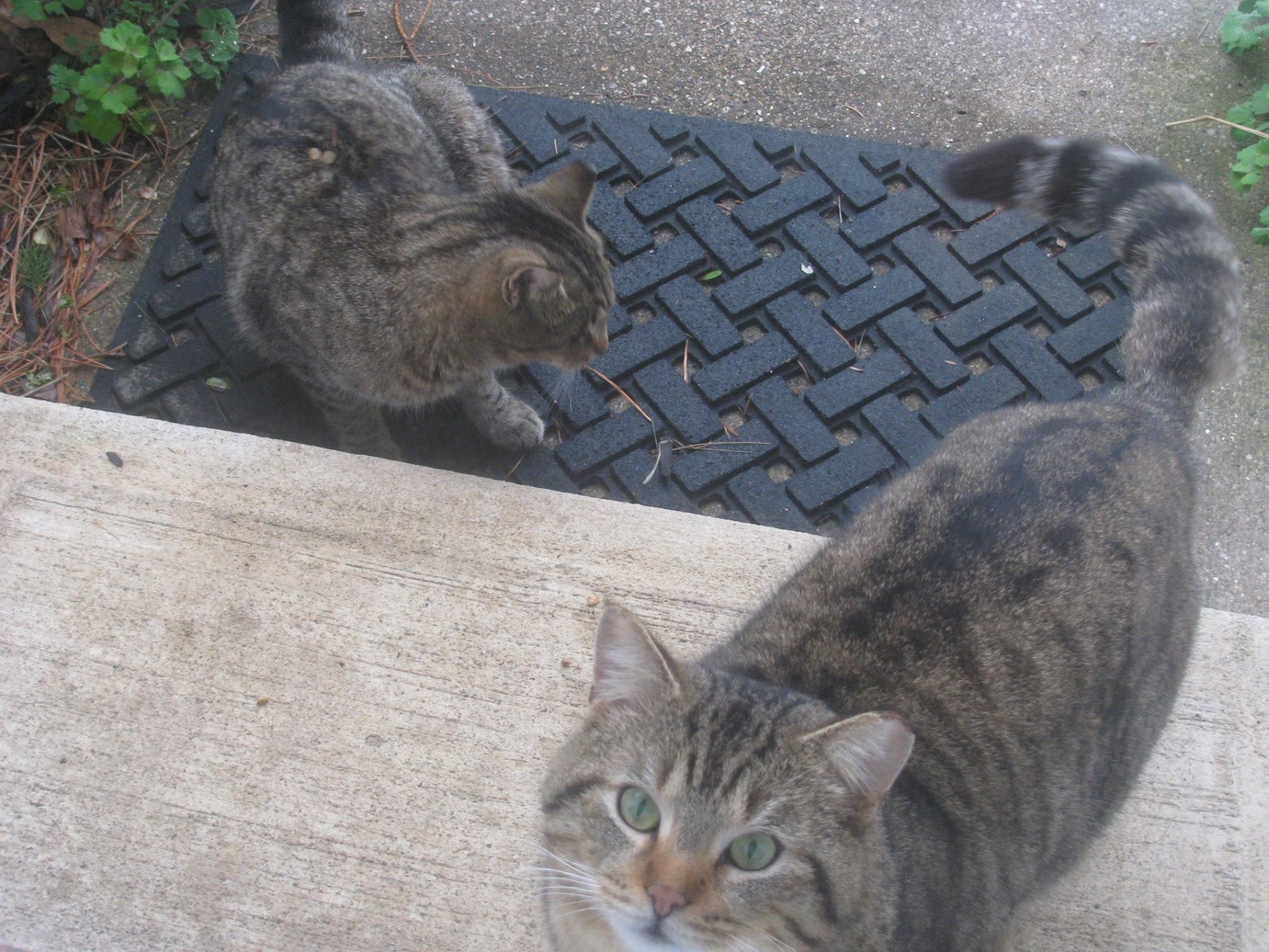 Elkhart County Feral Cat Coalition